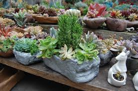 succulent pot ideas 86 inspiring style for creative containers for