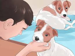 dog barks when we leave 3 ways to stop howling dogs wikihow
