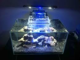 fluval edge marine light my fluval edge marine tank finally cycled stocking ideas aquariums