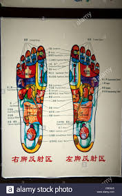 Foot Reflexology Map Reflexology Chart Stock Photos U0026 Reflexology Chart Stock Images