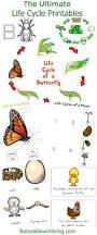 the ultimate life cycle printables animal habitats butterfly