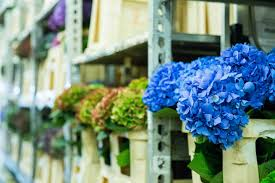 wholesale flowers holex flower quality wholesale flowers holex flower