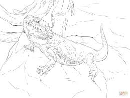 central bearded dragon coloring page free printable coloring pages