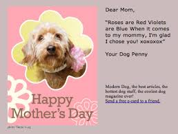 mothers day stuff my dog sent me a s day card modern dog magazine
