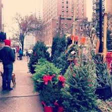 Washington Christmas Tree Farms - washington square park christmas tree nyc got to love ny