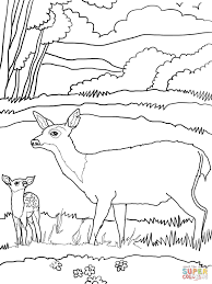baby mule deer with mother coloring page free printable coloring