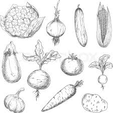 farm fresh sweet corn carrot and beetroot ripe tomato and