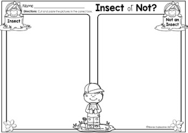 insect or not by rhonda baldacchino teachers pay teachers