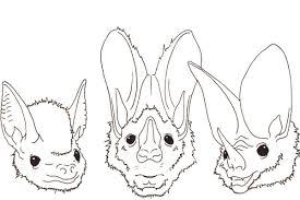 vision in echolocating bats
