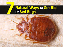 how can you get rid of bed bugs collection of solutions getting rid of bed bugs with how to rid of