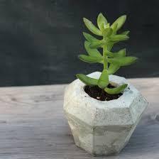 succulent planter gallery craftgawker