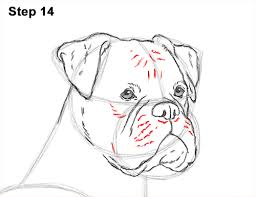 boxer dog howling how to draw a boxer dog