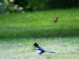 Birds In Your Backyard How To Attract Birds To Your Backyard 11 Steps With Pictures