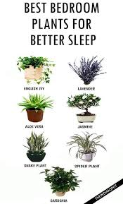 best house plants do you want a better sleep add these houseplants to your bedroom