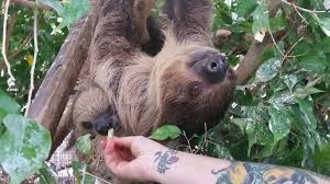 i got to pet a sloth today best thanksgiving aww