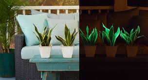 Plants That Don T Need Water Glowee Glow In The Dark Houseplant Pegplant