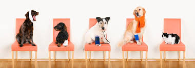 Which State Has The Most Dog Owners Per Capita According To 2016 Stats Pet Ownership Statistics Australian Ownership Rates U0026 Spending
