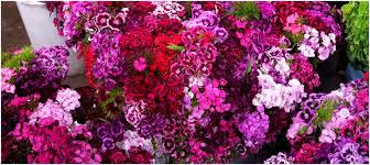 flowers san francisco san francisco flower mart heald wedding consulting