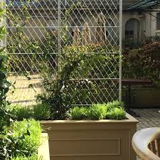 Privacy Trellis Ideas by Best 25 Garden Screening Ideas On Pinterest Privacy Vibrant Metal