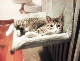 mpk 12 years cat radiator bed railing hammock 100 polyester