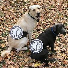 Halloween Costume Dog 15 Unique Creative Dog Costumes Gonna Laugh Fallinpets