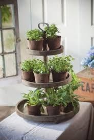 plantes cuisine faire pousser des plantes aromatiques en intérieur le coin potager