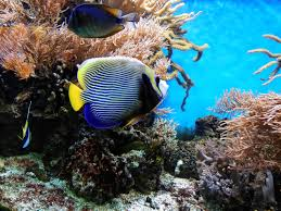 free images water underwater coral reef invertebrate