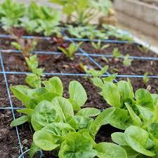 new square foot garden plans