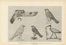 egyptian birds used in hieroglyphics falcon crane art of ancient
