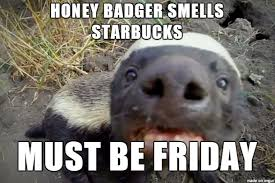 Honey Badger Memes - honey badger starbucks meme on imgur