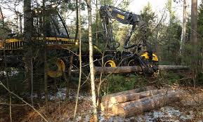 Wisconsin Forest images Wild rivers forestry northeastern wisconsin timber management jpg