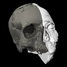skull decorations for the home a 9 500 year old skull gets a 3d makeover cnn style