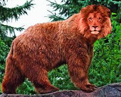 combination kodiak bear lion images