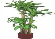 indoor office plants no light home design photo gallery