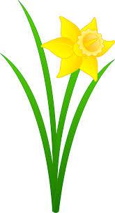 single golden daffodil free clip art