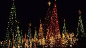 plantation baptist church christmas lights from tree lighting to train rides our area has plenty of holiday