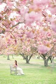 200 best cherry blossom wedding images on pinterest cherry