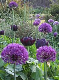 wild acre creating a cut flower garden this link shows us how