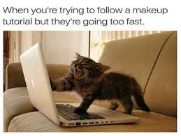 Cats Memes - purrfectly funny cats memes to brighten your caturday rub mint