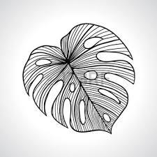 feuille de palmier noir macro feuille de palmier isolé