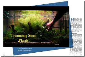 Aquascaping Techniques Aquascaping World Magazine Trimmng Stem Plants Aquascaping