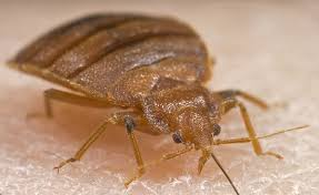 Bed Bugs On Mattress Does Bleach Kill Bed Bugs This Plus Other Diy Solutions That Work