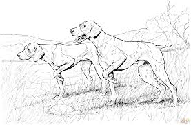 pointer dogs coloring page free printable coloring pages