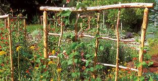 Growing Pumpkins On A Trellis Vertical Gardening The Tennessee Magazine