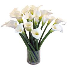 Calla Lily Flower Classic Calla Lilies Flower Spotlight Fiftyflowers The Blog