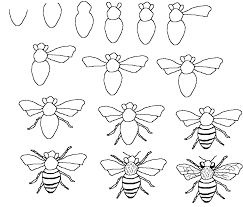 drawn bee line drawing pencil and in color drawn bee line drawing