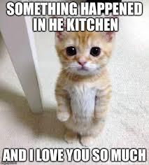 Cute I Love You Meme - cute cat meme imgflip