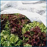 develop a sustainable vegetable garden plan dvd plus cd