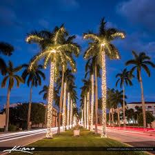 royal palm tree lights palm island