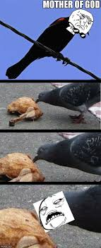 Sweet Mother Of God Meme - pigeon eating chicken imgflip